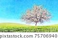 Lush blooming sakura cherry tree in wet watercolor 75706940