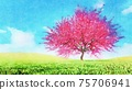 Pink sakura in full blossom Watercolor landscape 75706941