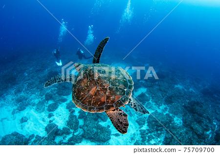 小gas原,秩父,海龜及潛水員2 75709700