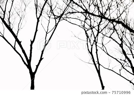 Winter trees. 75710996
