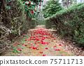 떨어진 동백꽃이 쌓이는 길 75711713