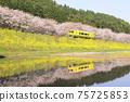 櫻花,油菜花和地方鐵路 75725853