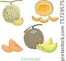 手工色,黃色甜瓜,切片,水果甜瓜 75729575