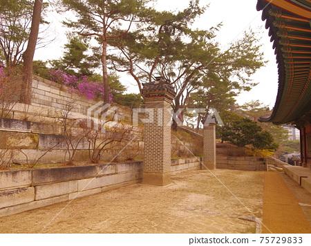 창경궁.창덕궁.홍매화.진달래꽃.소나무  75729833