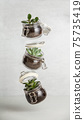 Small succulent plants in glass jar pot flying against white brick wall 75735419