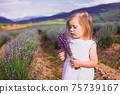 The wonderful aroma of lavender fills the soul with a wonderful feeling 75739167