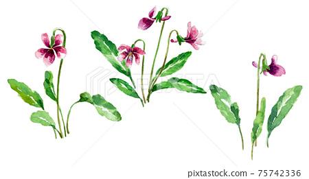 Violet watercolor 75742336