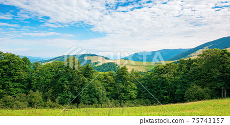 summer landscape of carpathian mountains. beautiful scenery in the morning. beech forest and grassy alpine meadows on the hills of chornohora ridge. bright sunny weather with fluffy clouds on the sky 75743157