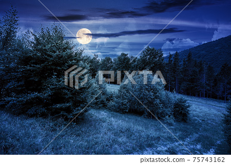 trees on the hill in summer scenery at night. beautiful mountain landscape in full moon light 75743162