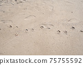Dog footprints on the sand tropical beach in sunny summer day 75755592