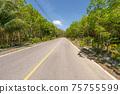 The asphalt road through the Rubber trees plantation in Summer season beautiful blue sky background at Phuket Thailand 75755599