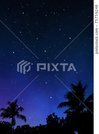 棕櫚樹和夜空,壯麗的自然風光 75759246