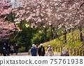人們在春天公園裡看著盛開的櫻花 75761938