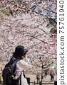 一位年輕的女攝影師,在春天公園拍攝盛開的櫻花 75761940