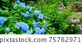 鷲子山에 신사 (올빼미 신사) 파란 수국 75762971