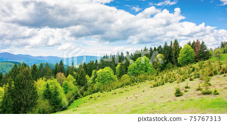 forest on the grassy meadow in mountains. beautiful countryside landscape on a sunny day. clouds on the blue sky above the distant borzhava ridge. spring adventures in carpathians 75767313