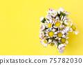 Beautiful daisy flowers in ceramic white vase on illuminating background from above 75782030