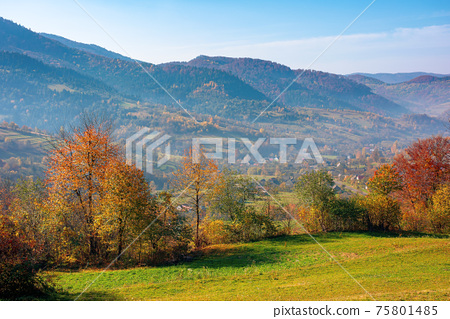 mountainous rural landscape in autumn. trees the edge of a hill in colorful foliage. sunny day with bright blue sky 75801485