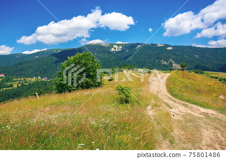 road through meadow in mountains. beautiful rural landscape of carpathians on a sunny day. wonderful summer weather with fluffy clouds on the sky 75801486
