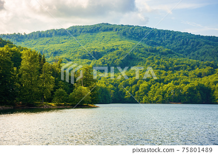 lake among beech forest in summer. beautiful nature landscape in mountains. vihorlat national park on a sunny day. 75801489