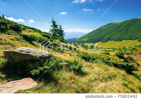 mountain landscape on a summer day. trees on the grassy hill. scenery rolling down the valley in to the distant view. blue sky with fluffy clouds above the black ridge. wonderful adventures in 75801492