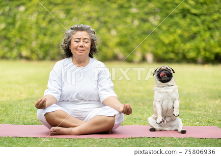 Calm of Healthy Asian Elderly woman with white hairs doing yoga lotus pose for meditation with dog pug breed on green grass at park,Wellness Senior Recreation with yoga concept 75806936
