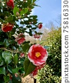 Tsubaki two-tone color 1 75816330