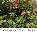 Tsubaki two-tone color 2 75816333