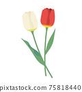 紅色和白色的鬱金香圖標 75818440