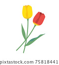 紅色和黃色的鬱金香圖標 75818441