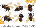Set Honey bee from different angles on white background. Bee icon with honeycomb. Vector illustration 75822595