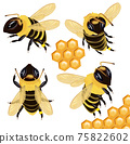 Set Honey bee from different angles on white background. Bee icon with honeycomb. Vector illustration 75822602