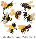 Set Honey bee, wasp, hornet, bumblebee from different angles on white background. Vector icon set 75822618