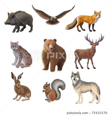 Cartoon Forest Animals Set 75832570