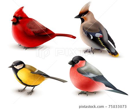 Winter Birds Set 75833073