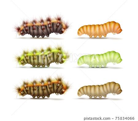 Set of caterpillars 75834066
