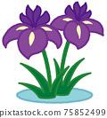 iris 75852499