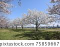 小松河Senbonzakura 75859667