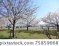 小松河Senbonzakura 75859668