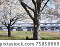 小松河Senbonzakura 75859669
