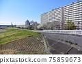 小松河Senbonzakura 75859673