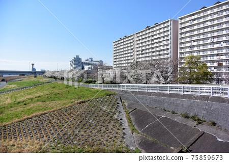 Komatsu River Senbonzakura 75859673