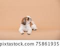 小狗 75861935