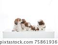 小狗 75861936