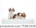 小狗 75861938