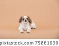 小狗 75861939