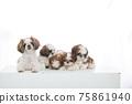 小狗 75861940