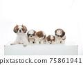 小狗 75861941