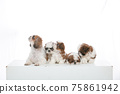 小狗 75861942
