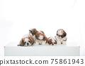小狗 75861943